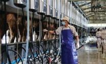 Công nghệ cao trong chăn nuôi