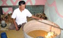 Ninh Bình: Hiệu quả từ mô hình nuôi gà Ja- Dabaco
