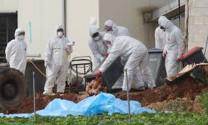 Nghệ An: Cấp bách chống dịch cúm gia cầm