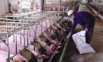 Cần quan tâm đến chăn nuôi hữu cơ