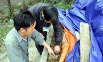 Hà Giang: Hiệu quả ủ chua cỏ dự trữ thức ăn chăn nuôi ở Quản Bạ