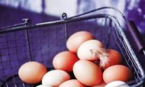 Top 10 quốc gia sản xuất trứng lớn nhất thế giới