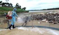 Nam Định: Được xuất cấp 15.000 lít hóa chất sát trùng