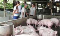 Nỗ lực đẩy lùi chất cấm trong chăn nuôi