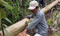 Phú Yên: Tạm dừng dự án nuôi bò thịt chất lượng cao