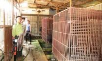Thanh Hóa: Tăng cường kiểm tra hoạt động nuôi động vật hoang dã