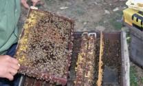 Nghệ An: Lãi ròng hàng tỷ từ mật ong