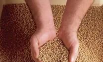 Giá thức ăn chăn nuôi giảm tối đa 7%