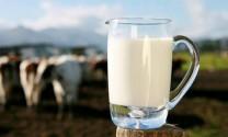 5 thú vị về sữa