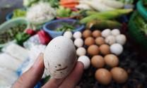 TP Hồ Chí Minh: Truy xuất nguồn gốc đối với thịt, trứng gia cầm