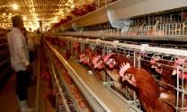 Hà Tĩnh: Phát triển hệ thống từ trang trại đến bàn ăn
