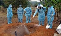 Tình hình cúm gia cầm trên thế giới và Việt Nam