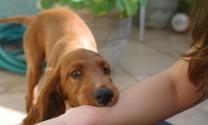 Hỏi đáp: Biện pháp phòng chống bệnh khi bị chó dại cắn