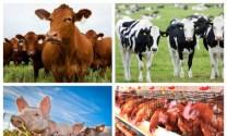 """Hòa Bình: Triển khai Đề án """"Phát triển chăn nuôi bền vững"""""""