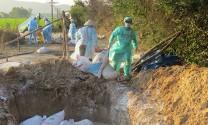 Hà Nam:Tiêu hủy 800 con vịt, hơn 300 con ngan do mắc cúm A/H5N1