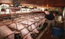Phát triển chăn nuôi bền vững