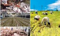 Đầu tư hạ tầng phát triển nông nghiệp