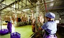 An toàn thực phẩm  để mở rộng thị trường