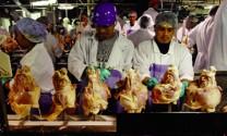 Giá thịt thế giới tăng 6 tháng liên tiếp
