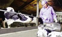 Quy chuẩn kỹ thuật quốc gia cơ sở vắt sữa và thu gom sữa tươi - yêu cầu để  bảo đảm an toàn thực phẩm (hết)
