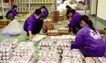 Sản phẩm chăn nuôi: An toàn để thông thương