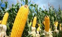 Nhập khẩu thức ăn gia súc đạt 258 triệu USD