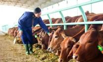 Cần xây dựng thương hiệu cho sản phẩm chăn nuôi