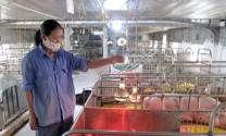 Hưng Yên: Bảo đảm chất lượng giống vật nuôi