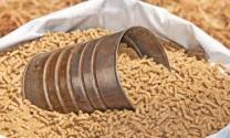 Nhập khẩu thức ăn gia súc ước đạt 205 triệu USD