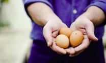 Philippines: Kêu gọi Chính phủ ban lệnh cấm nhập khẩu trứng