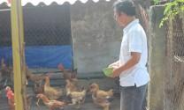 Hiệu quả từ mô hình nuôi gà theo hướng an toàn sinh học