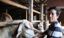 Lào Cai: Hỗ trợ sinh kế cho người dân thoát nghèo