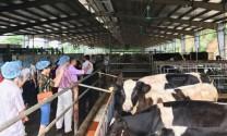 'Điểm tựa' vững chắc cho người chăn nuôi