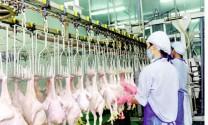Bước ngoặt của sản phẩm chăn nuôi