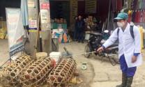 Thái Bình: Tiêm phòng bệnh cho đàn vật nuôi