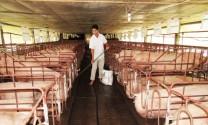 Nông dân Nghệ An xây 18.000 bể biogas trong chăn nuôi
