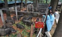 Quảng Bình: Phát triển đàn gia súc, gia cầm theo hướng gia trại, trang trại