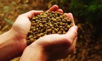 Sử dụng thảo dược trong TĂCN đem lại hiệu suất cao