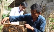 Hội thi mật ong bạc hà