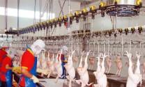 TP Hồ Chí Minh: Quy hoạch 7 nhà máy giết mổ gia súc hiện đại