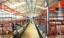 Công nhận 72 tiến bộ kỹ thuật trong chăn nuôi