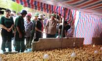 Dự án khuyến nông giải quyết nhu cầu việc làm