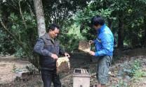 Hòa Bình: Hiệu quả mô hình nuôi ong mật ở xã Lâm Sơn