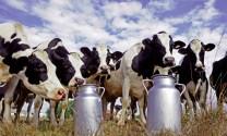 """Ngành sữa Ấn Độ  """"đón đầu"""" thị trường"""