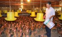 Thái Nguyên: Chăn nuôi thời công nghệ