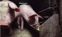 Hiệu quả dinh dưỡng và môi trường từ Protease