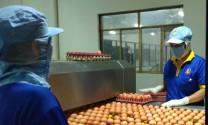 """Trứng gà đạt chứng nhận """"chuỗi"""" chiếm trên 50% thị phần"""