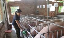 Tiêu chuẩn chăn nuôi hữu cơ
