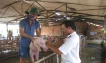Lạng Sơn: Tiêm phòng trên 99 nghìn gia súc, gia cầm