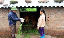Tăng cường phòng, chống rét cho vật nuôi, cây trồng